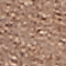 Brown Full-Grain Leather